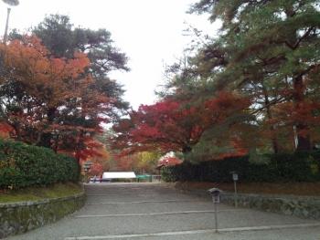 20141120紅葉~~♪