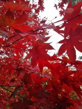20141120紅葉~~♪3