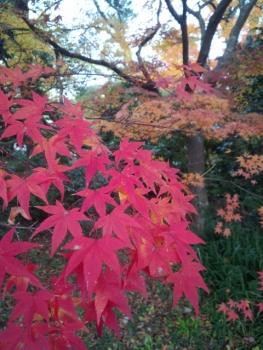 20141120紅葉~~♪5