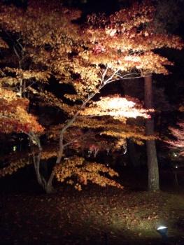 20141122紅葉 ライトアップ2