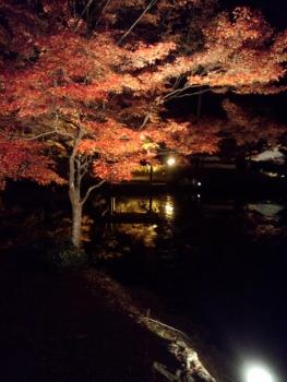 20141122紅葉 ライトアップ3
