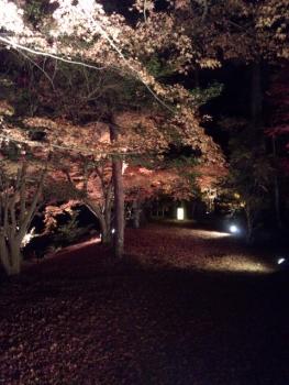 20141122紅葉 ライトアップ4