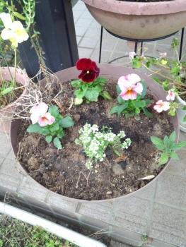 20141125玄関前の花2