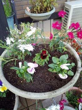 20141203玄関の花2