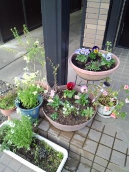 20141203玄関の花4
