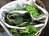 14薬草収穫