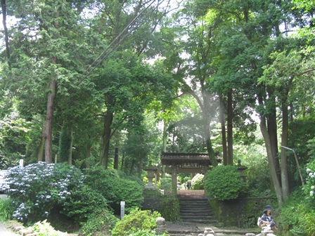 11アジサイの浄智寺