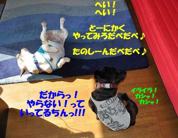 003_20141201142238959.jpg