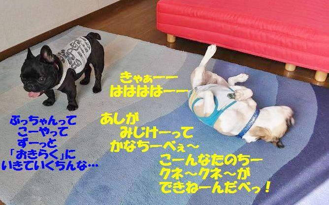 009_20141201142259b4f.jpg