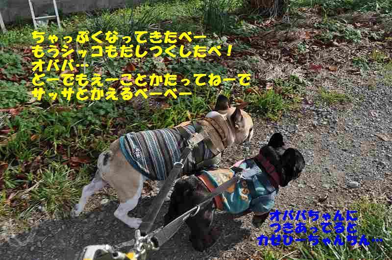 097_201412170910026cd.jpg
