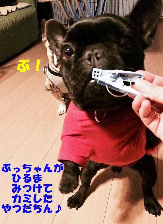 IMG_4176.jpg