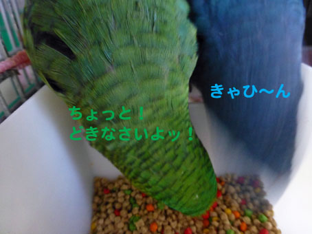 P1180002.jpg