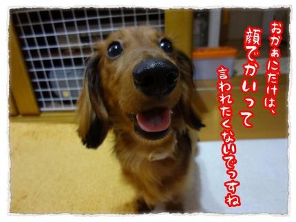 2012_6_14_7+-+繧ウ繝斐・_convert_20120614231746