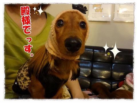 2012_10_10_3.jpg