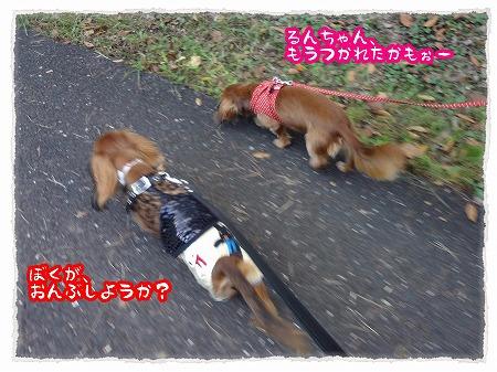 2012_10_11_2.jpg