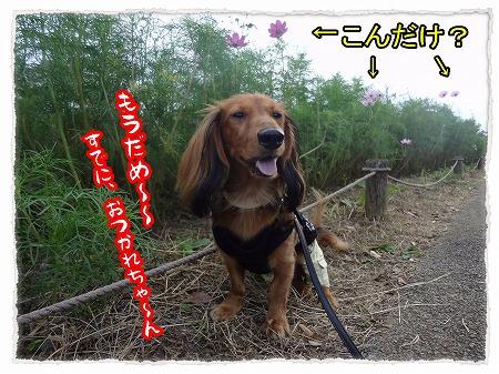 2012_10_11_3.jpg