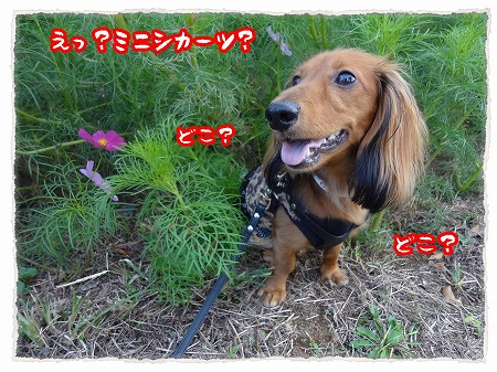 2012_10_11_4.jpg