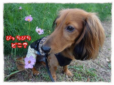 2012_10_11_7.jpg
