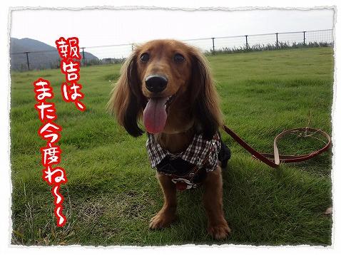 2012_10_15_3.jpg