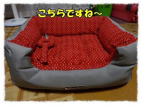 2012_10_17_1.jpg