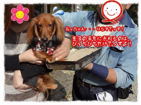 2012_10_18_3.jpg