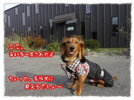 2012_10_18_8.jpg