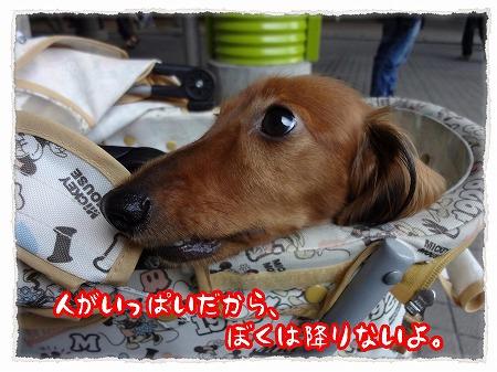 2012_10_1_3.jpg
