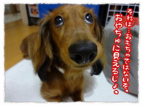 2012_10_24_1.jpg