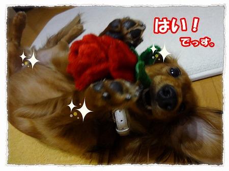 2012_10_27_5.jpg