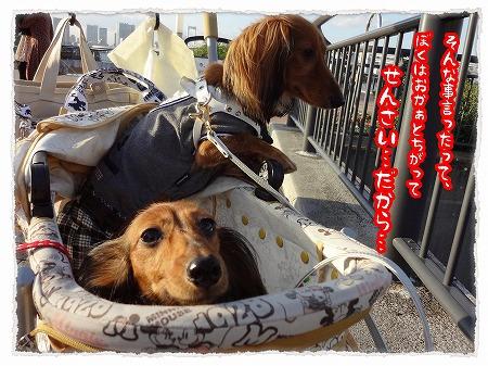 2012_10_29_4.jpg