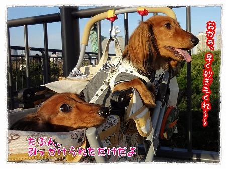 2012_10_29_8.jpg