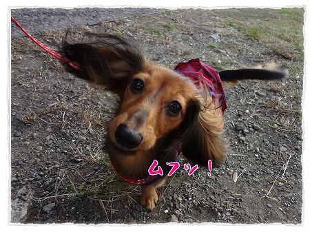2012_10_30_1.jpg