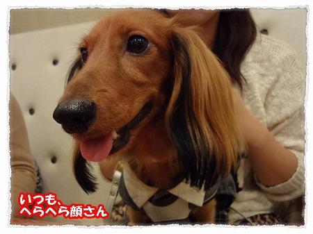 2012_10_30_4.jpg