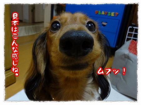 2012_10_30_6.jpg