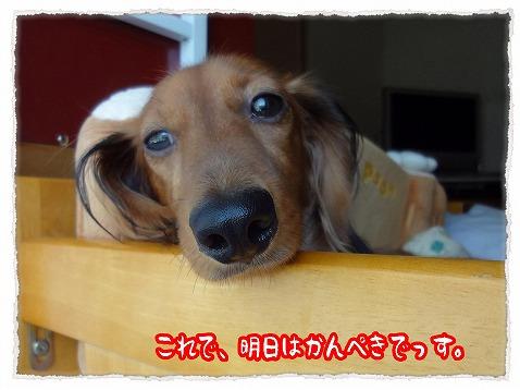 2012_10_6_4.jpg