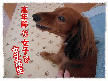 2012_11_10_3.jpg