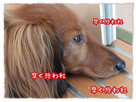 2012_11_10_4.jpg