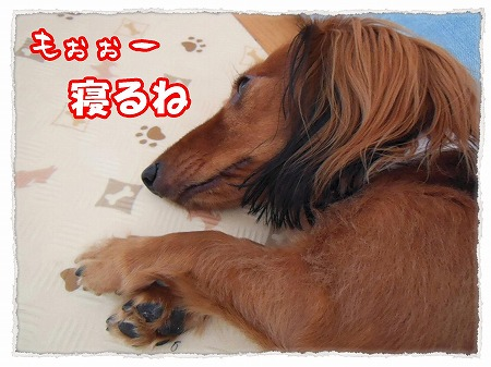 2012_11_10_5.jpg