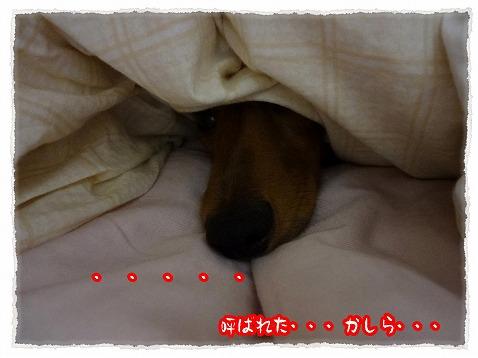 2012_11_12_11.jpg