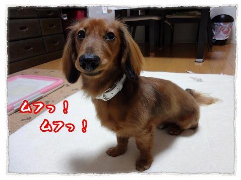 2012_11_12_4.jpg