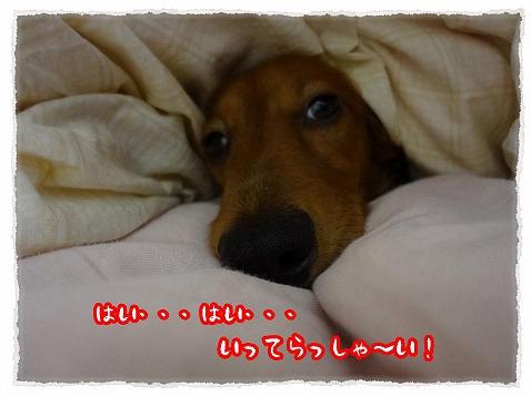 2012_11_13_13.jpg