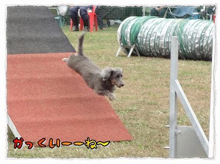 2012_11_14_3.jpg