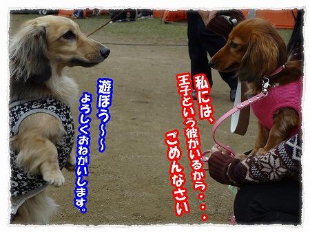 2012_11_14_5.jpg