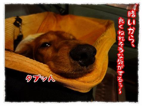 2012_11_17_2.jpg