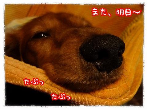 2012_11_17_3.jpg