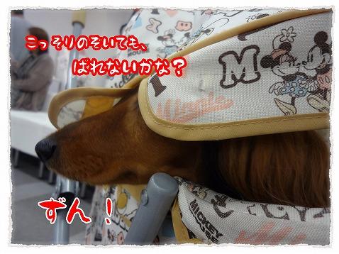 2012_11_17_4.jpg