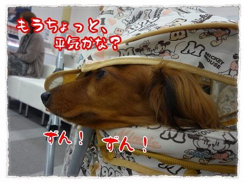 2012_11_17_5.jpg