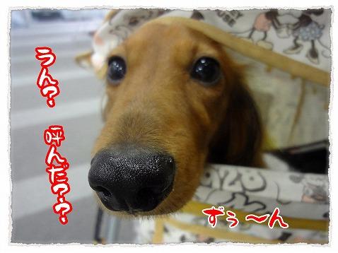 2012_11_17_6.jpg