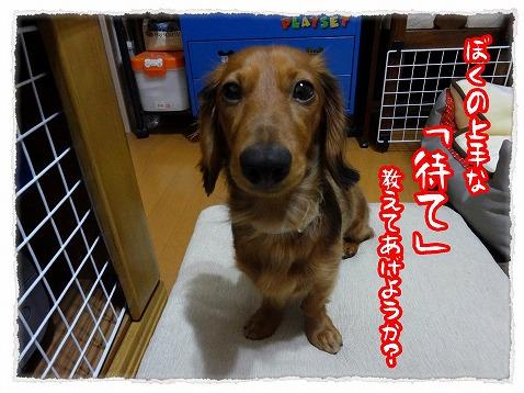 2012_11_18_1.jpg