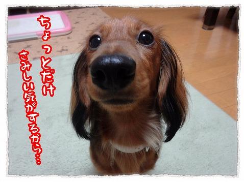 2012_11_1_3.jpg